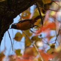 霜月も最後、鳥の季節は