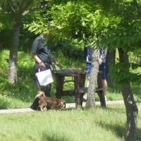 於大公園の花 : オルレア ・・・ 晴天になった芝生広場は小学生アスリートがトレーニングしてました。