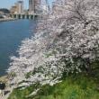 どまつり夜桜in岡崎
