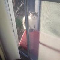 猫のお見舞いか。