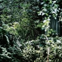 【Aug_17】裂開する緑_OVERGROWTH#2