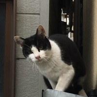 「ノラ猫」騒動!・・・さて・・・本当に「猫との知恵比べ」に勝てたのか???(^^)