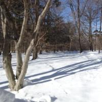 赤城自然園・サポーター特別開園に行ってきました~雪景色。。。素敵~~