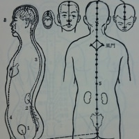 任脈・督脈+十二経脈