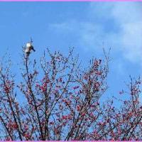 季節は移り、「春」を待つものたち