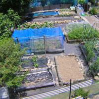 菜園の様子、家庭菜園2017年菜園全景