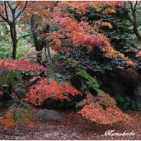日本庭園の晩秋