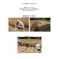 麦刈りなど