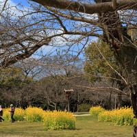 福岡市 大濠公園と南丸多聞櫓