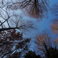 雪の中で踊りました!!・・神戸森林植物園の雪景色
