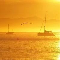 朝焼けの海鳥たち
