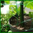 家庭菜園 ① 収穫第1号