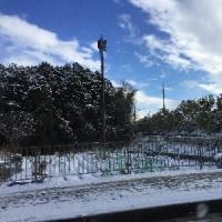 今日も、雪!