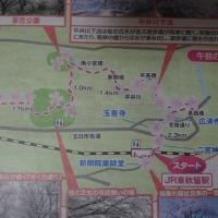 街プレ倶楽部 『平井川下流と周辺の桜の名所めぐり』