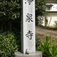 栃木県那須塩原市、越掘の大杉です!!