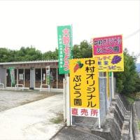 中村オリジナルぶどう園さん