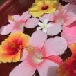 今日のお花達・・・