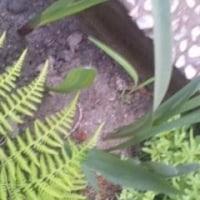 バスタオルをGet & Gladiolus!