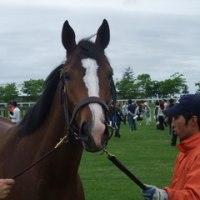2009年募集馬 社台・サンデー牧場見学ツアー その5