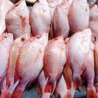シェフが、不法漁獲物を購入し逮捕された  米国HUSTON