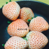 淡雪 白イチゴ