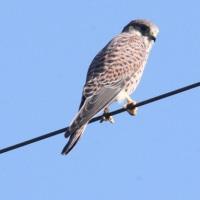 散歩道で出会った野鳥