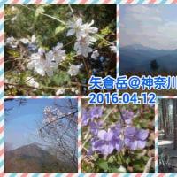 【モブログ】足柄の素敵なトレイル・矢倉岳