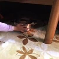 『殻を割った卵からヒヨコをふ化させる』を家で実験してみた