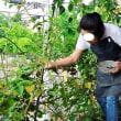 自家栽培ブラックベリーのジャム(おうちCafeわんこ堂)