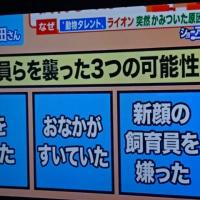 最近の解読 沢田研二について