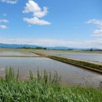 新潟市北区おやまの田んぼ