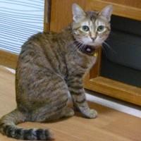 お気に入りのネコ写真はですね