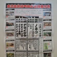 鹿児島県侵略的外来種番付表