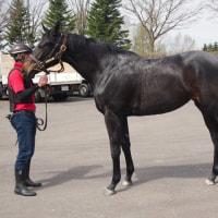 2歳馬 モンアムール