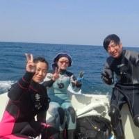 ダンゴウオ成魚も幼魚も登場☆ (広島 ダイビング)