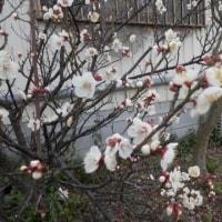 春1番・18度→3度