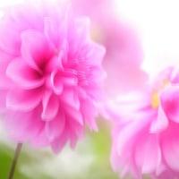 花をふんわり撮ろう♪ ①