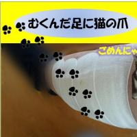 浮腫んだ足に猫の爪⇒バイ菌が奥まで潜り込み⇒点滴3日間治療にゃ=ん