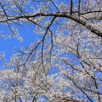 ふもとから春が登ってきました