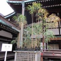 京都御所の清涼殿 河竹(漢竹) と 呉竹