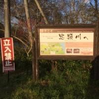 Salmon '16 in Japan (1)