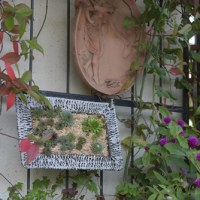 """真冬でもお外OKの、多肉植物「センペルビブム」のリメイク・・・""""壁飾り風"""""""