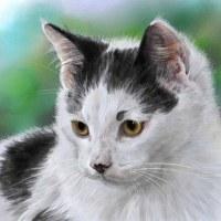 河原の子猫 コッシー