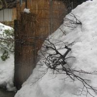 雪はあきたよ