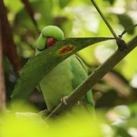 Jurong Bird Park 2