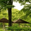 万博公園 (6月6日)