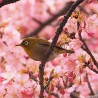 桜の頃のおススメジャズオルガンライブ