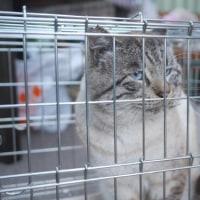 2月のTNR、公園27匹目、人馴れした猫のリリース