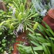 激しい雨と 紫蘇シロップ