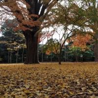 晩秋  (京都御苑)